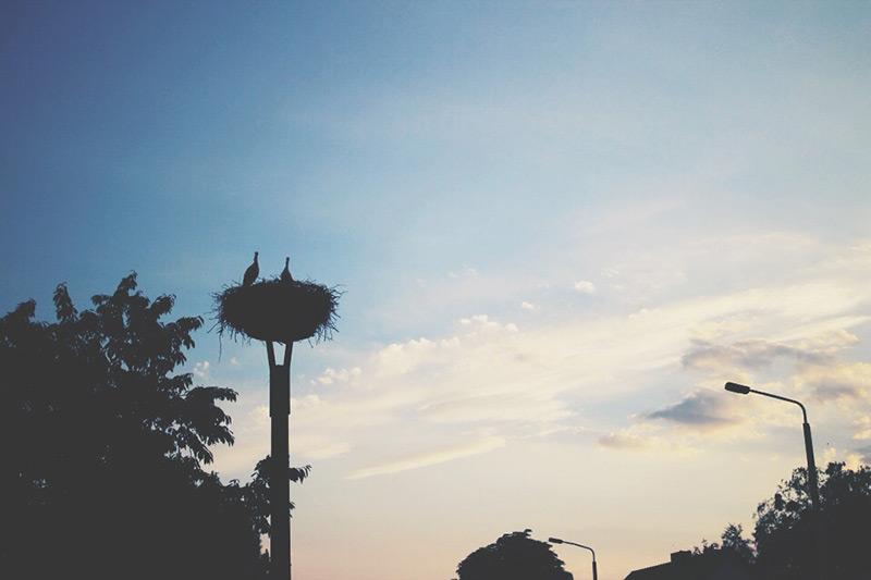 smaracuja storchennest brandenburg Sommer Bucket List