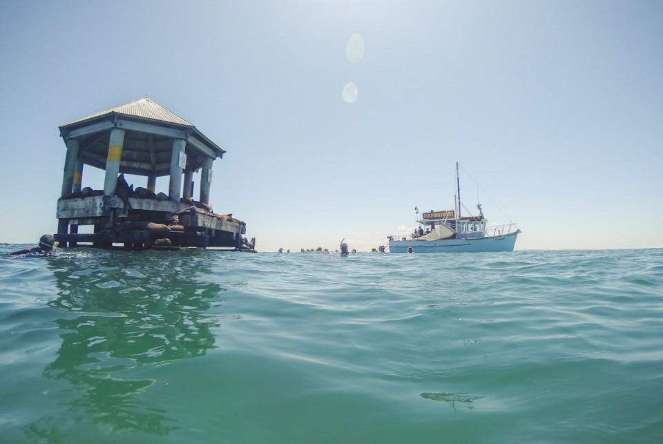 Schwimmen mit Delfinen in Australien