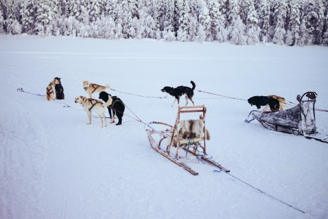 Lappland Levi Finnland Husky Hundeschlitten