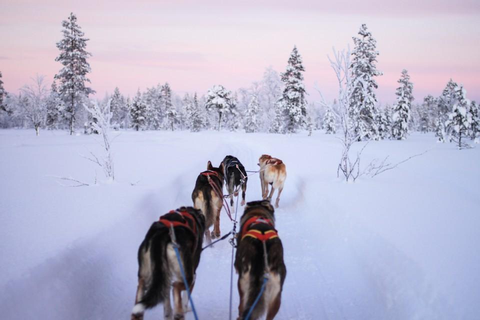 Lappland Hundeschlitten Husky tour Levi