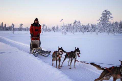 Lappland Hundeschlitten Smaracuja Levi