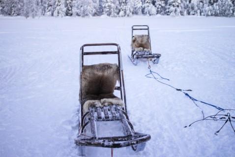 Lappland-Smaracuja-31
