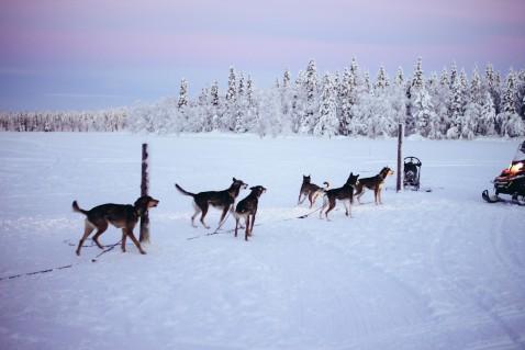 Lappland-Smaracuja-33
