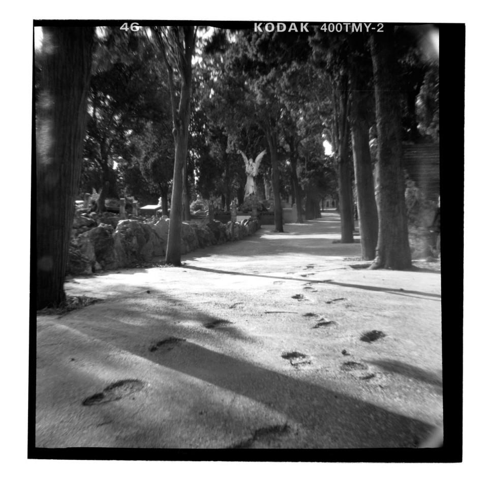 barcelona-schatten-des-windes-Friedhof