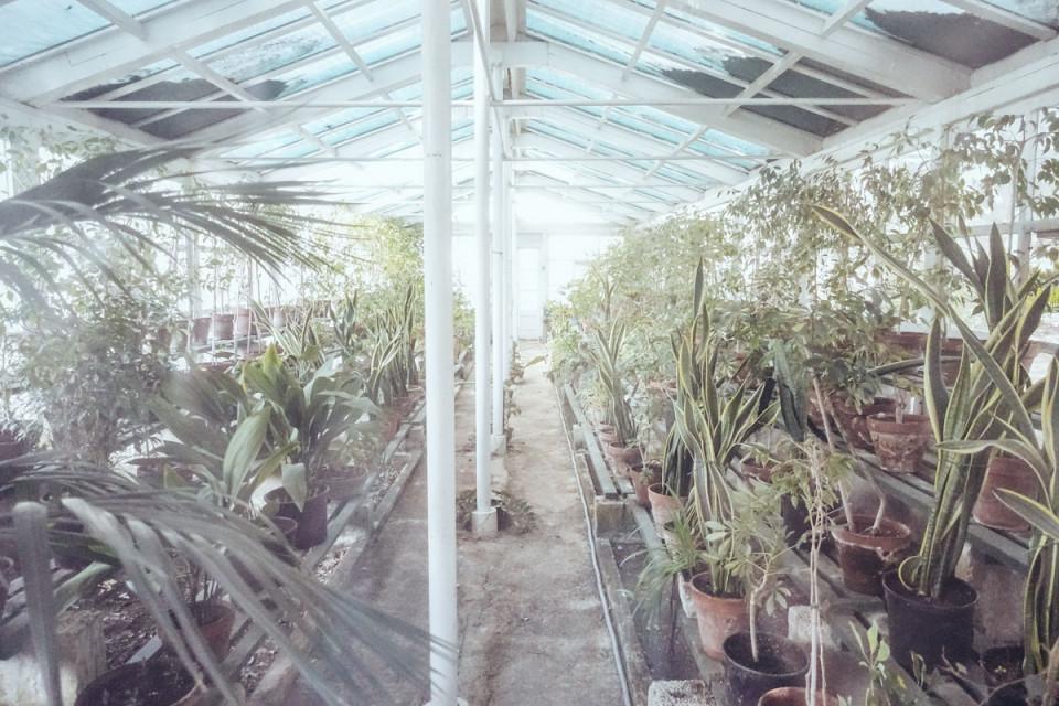 Smaracuja Sa Maison Garten