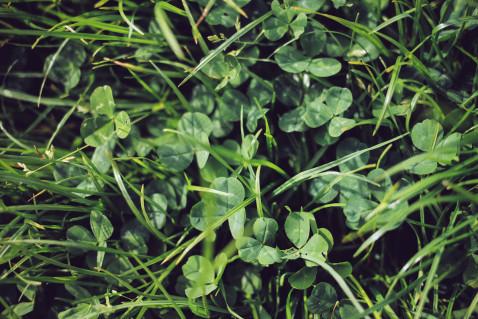Smaracuja Ireland's Ancient East Hill of Tara Klee