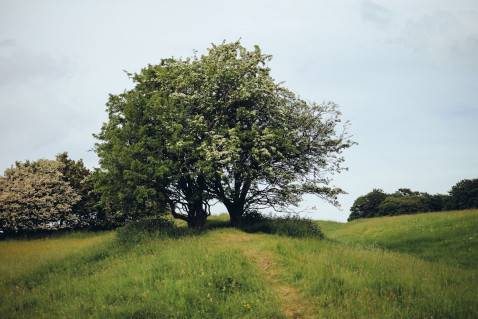 Smaracuja Ireland's Ancient East Hill of Tara Fairy Tree