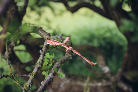 Smaracuja Ireland's Ancient East Hill of Tara Fairy Tree
