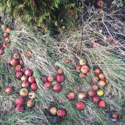 Herbst Bucket List Äpfel