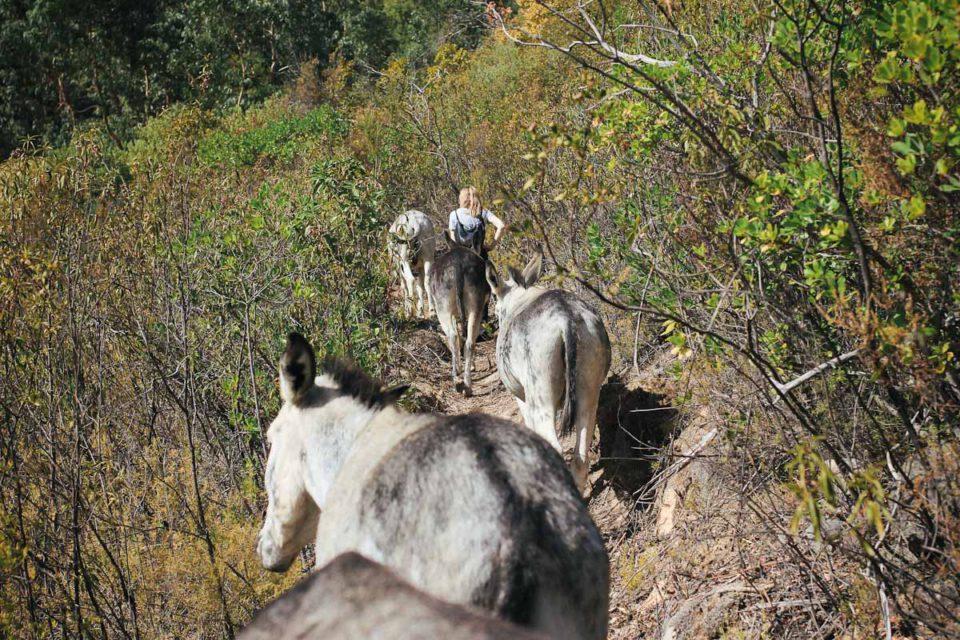 Algarve Portugal Monchique Happy Donkeys Eselwanderung