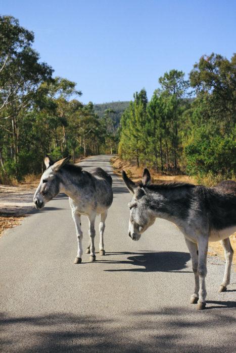 Happy Donkeys Esel Algarve