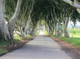 Dark Hedges Game of Thrones Drehort Nordirland