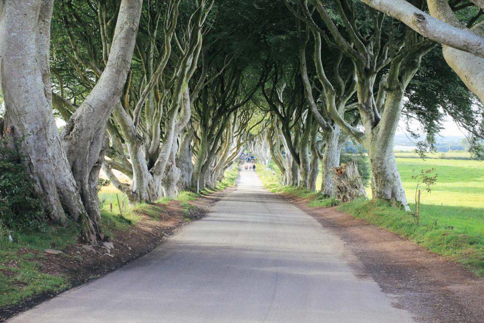 Dark Hedges Game of Thrones Drehort Nordirland