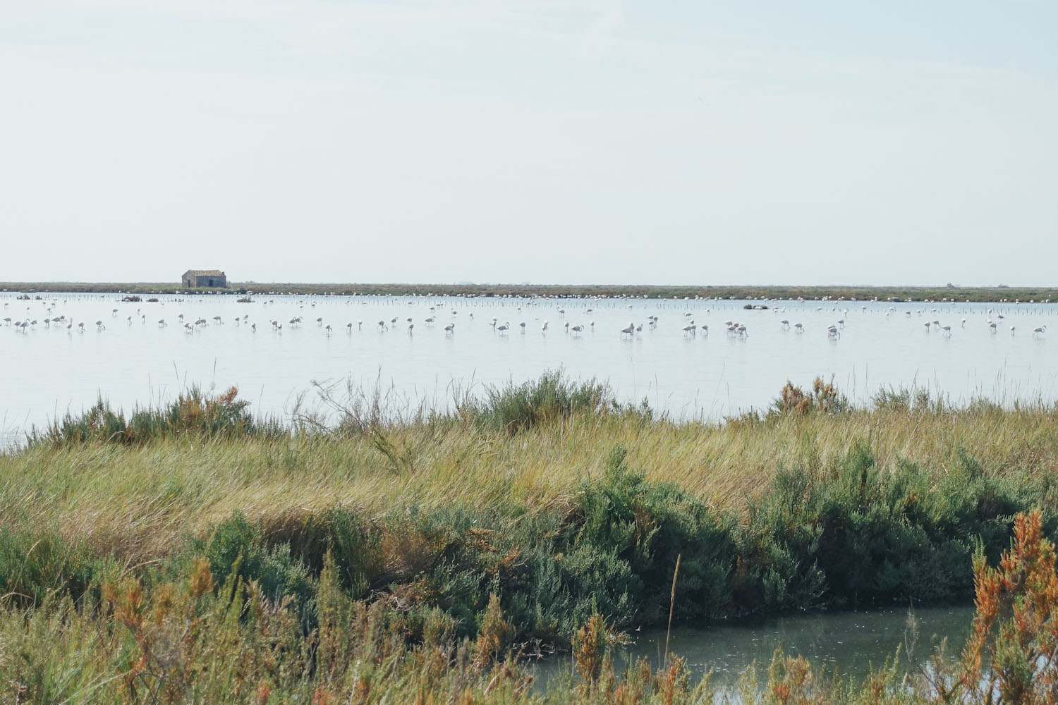 Flamingos Podelta Nationalpark Italien