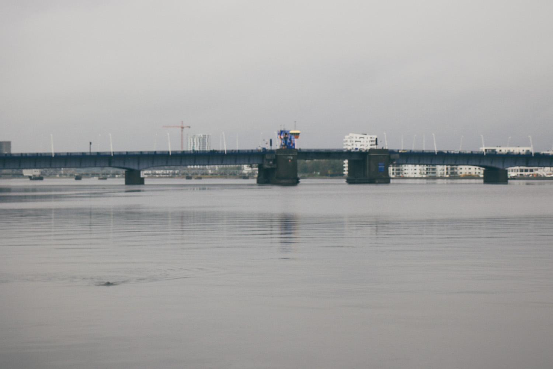 Limfjord Seehund Aalborg Städtereise